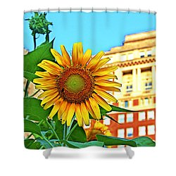 Shower Curtain featuring the photograph Sunflower In The City by Alice Gipson