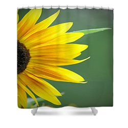 Sunflower Morning Shower Curtain by Bill Cannon
