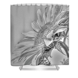 Sunflower Shower Curtain by Rod Wiens