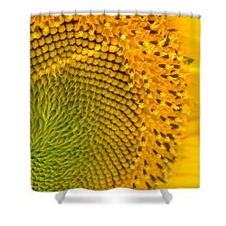 Sunflower Study 1 Shower Curtain