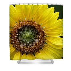 Shower Curtain featuring the photograph Sunflower With Insect by Daniel Reed