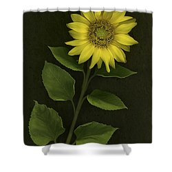 Sunflower With Rocks Shower Curtain by Deddeda