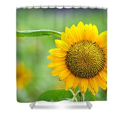 Sunflower Shower Curtain by Yew Kwang