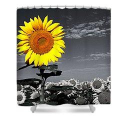 Sunflowers 1 Shower Curtain by Sumit Mehndiratta