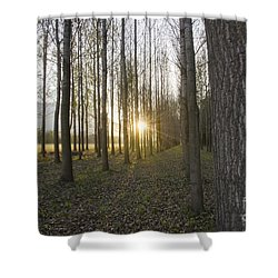 Sunlight In The Forest Shower Curtain