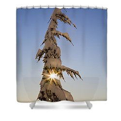 Sunlight Through Snow-covered Tree Shower Curtain by Craig Tuttle