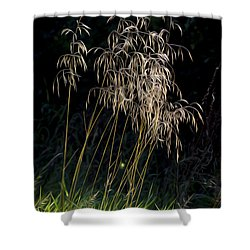 Sunlit Grasses. Shower Curtain