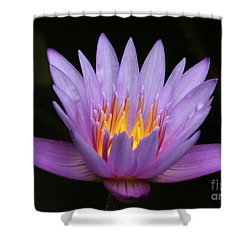 Sunlit Water Lily Shower Curtain by Sabrina L Ryan