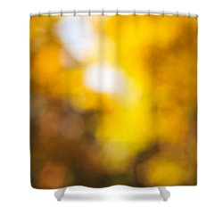 Sunny Fall Forest Shower Curtain by Elena Elisseeva