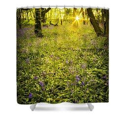 Sunrise In Bluebell Woods Shower Curtain by Amanda Elwell
