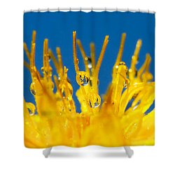 Sunrise Shower Curtain by Lisa Knechtel