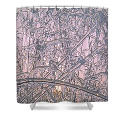 Sunrise Through Ice Covered Shrub Shower Curtain by Tom Wurl