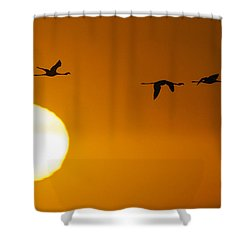 Sunset 3 Shower Curtain