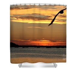 Shower Curtain featuring the photograph Coming Home by Katy Mei