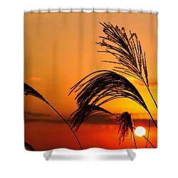 Sunset And Pampus Shower Curtain
