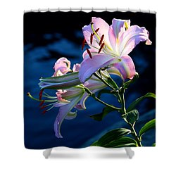 Shower Curtain featuring the photograph Sunset Lily by Patrick Witz