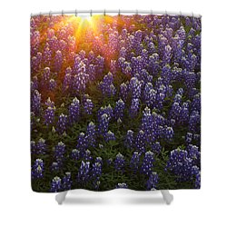 Sunset Over Bluebonnets Shower Curtain by Susan Rovira