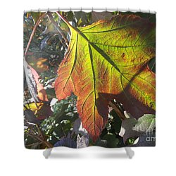Surrender Shower Curtain by Trish Hale