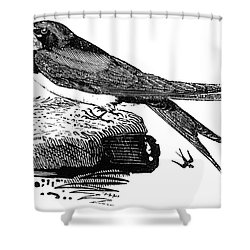 Swallow, C1800 Shower Curtain by Granger