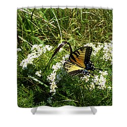 Swallow Tail  Shower Curtain by Skip Willits
