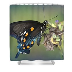 Swallowtail 1 Shower Curtain