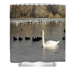 Swan And Ice Shower Curtain by John Chatterley