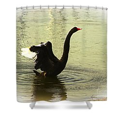 Swan Dance 3 Shower Curtain by Blair Stuart