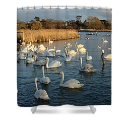Shower Curtain featuring the photograph Swan Lake by Katy Mei