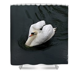 Shower Curtain featuring the photograph Swan On Black Water by Les Palenik