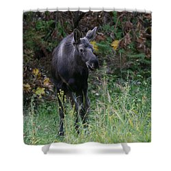 Shower Curtain featuring the photograph Sweet Face by Doug Lloyd