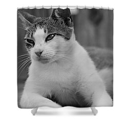 Sweet Life Shower Curtain by Kim Henderson