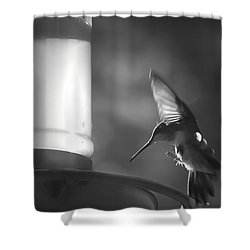 Sweet Light Shower Curtain by Kim Henderson