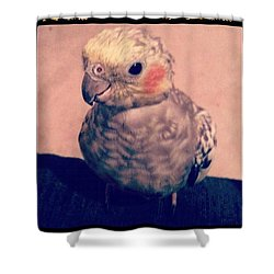 Sweet Little Lilly Tiel Shower Curtain