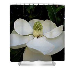 Shower Curtain featuring the photograph Sweet Magnolia by Paul Mashburn