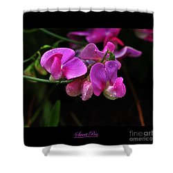 Sweet Pea Flower Shower Curtain by Elaine Manley