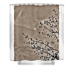 Shower Curtain featuring the photograph Sweetgum Sepia by Judi Bagwell