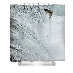 Swimming Upstream Shower Curtain by Gloria & Richard Maschmeyer