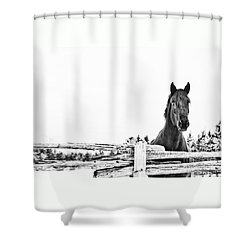 Take Me For A Ride Shower Curtain
