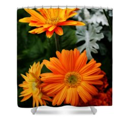 Tangerine Colored Gerbera Daisies Shower Curtain by Kay Novy