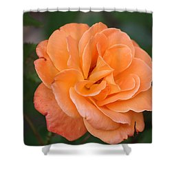 Shower Curtain featuring the photograph Tangerine Rose by Donna  Smith