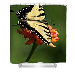 Tantalizing Tiger Swallowtail Butterfly Shower Curtain by Sabrina L Ryan