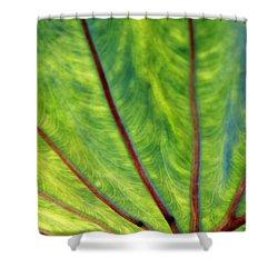 Taro 1 Shower Curtain