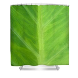 Shower Curtain featuring the photograph Taro Or Elephant Ear Leaf by Denise Beverly