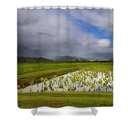 Taro Storm Shower Curtain by Mike  Dawson