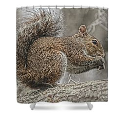 Tasty Tidbits Shower Curtain by Deborah Benoit