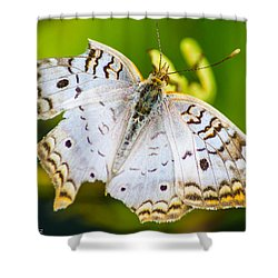 Shower Curtain featuring the photograph Tattered Moth by Shannon Harrington