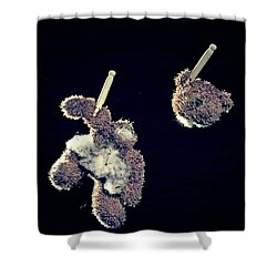 Teddy Without Head Shower Curtain by Joana Kruse
