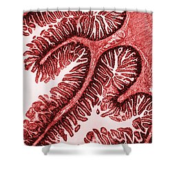 Tem Of Intestinal Villi Shower Curtain by Science Source