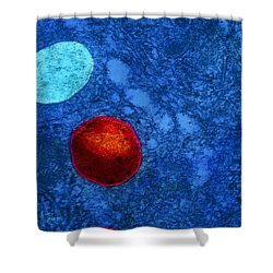 Tem Of Primary Lysosome In Liver Cellsc7036 Shower Curtain by CNRI and SPL and Photo Researchers
