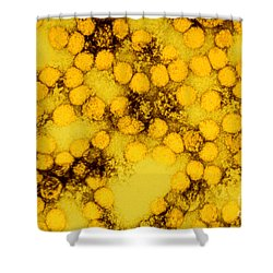 Tem Of Yellow Fever Viruses Shower Curtain by Science Source